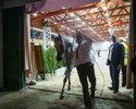 Wiadomości: Tak źle nie było od lat. Tylko 410 tys. euro za konie na aukcji Pride of Poland w Janowie Podlaskim