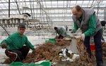 Pracodawcy zapłacą za oświadczenia o zatrudnieniu cudzoziemców. Senat zatwierdził zmiany