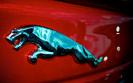 Marvipol prognozuje sprzedaż. Importer Jaguara w Polsce spodziewa się dobrego roku