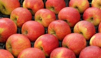 Sadownicy będą mieli kłopoty ze sprzedażą jabłek?