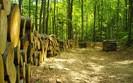 Las Państwowy