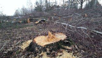 Wycinka drzew. Mimo obietnic, poprawki PiS w przepisach odłożone