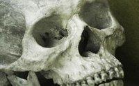 Gąbki to najstarsze zwierzęta