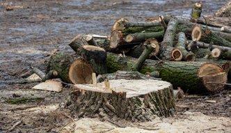 Wycinka drzew. Tarnów obniżył stawki dla inwestorów