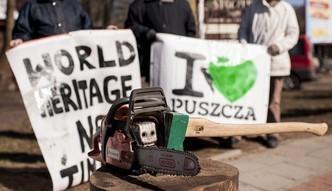"""Spór o Puszczę Białowieską. Szyszko: """"ponad milion drzew do wycięcia"""""""