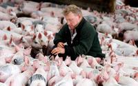 Nowe warunki pracy przy obsłudze zwierząt. Zaczną obowiązywać już za pół roku