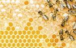 Decydujący krok w ochronie europejskich owadów zapylających
