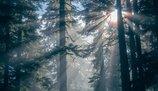 Rząd dopuszcza sprzedaż lasów? Kolejne kontrowersje wokół Mieszkania+