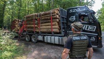 Wiadomo już, kto kupuje drewno z wycinki w Puszczy Białowieskiej. Lista liczy 128 firm