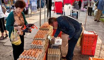 Jaja zakażone salmonellą pochodzą z Wielkopolski