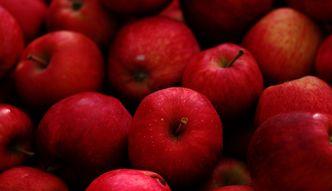 Producenci jabłek będą odpłatnie wycofywać jabłka z rynku