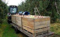 Mniejsze zbiory jabłek w Polsce. Szykują się wyższe ceny