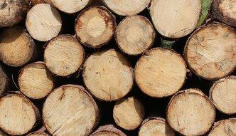 Grupa Paged: nie kupowaliśmy w tym roku drewna z Puszczy Białowieskiej
