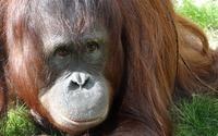 Lasy Borneo potrzebują naszej pomocy