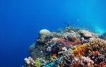 Śledzenie wpływu ocieplania się oceanów na przeżywalność koralowców